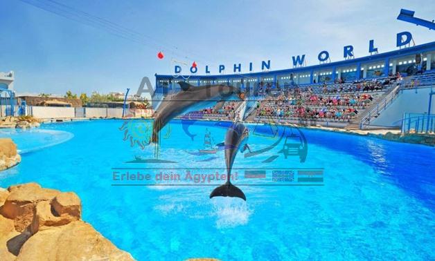 Dolphin_Show_World_Hurghada_1_at-touren.de