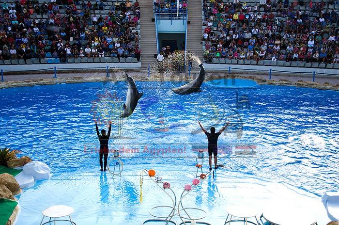 Delfinshow in Hurghada - at-touren.de
