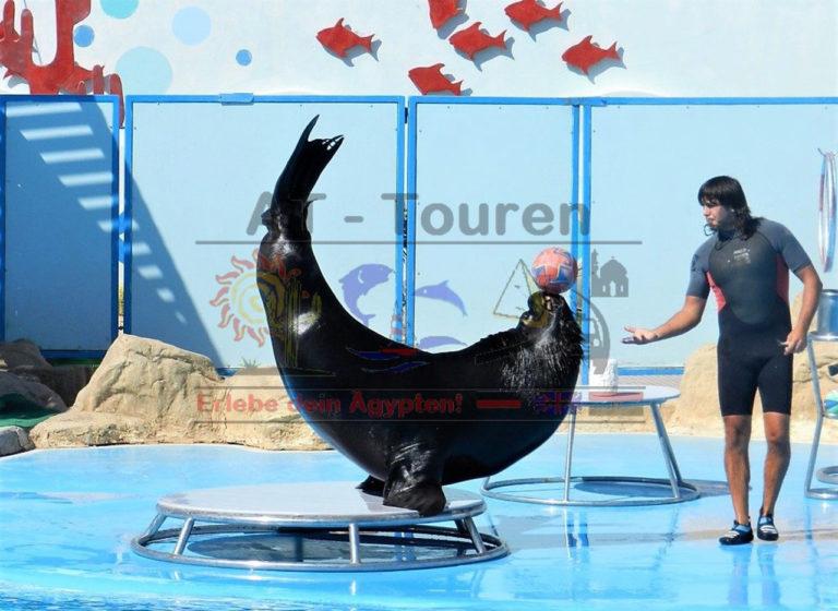 Dolphin_Show_World_Hurghada_3_at-touren.de