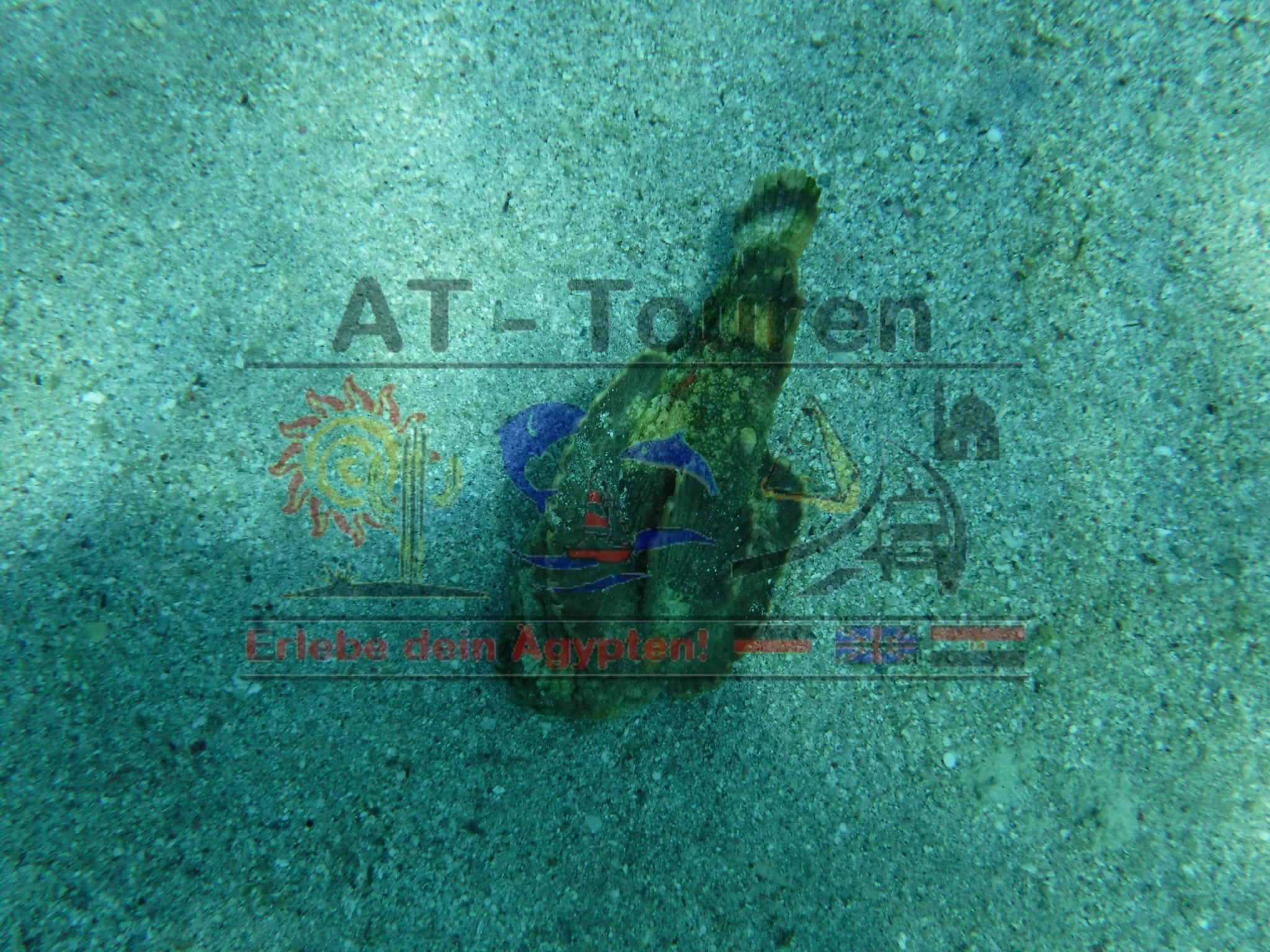 Marsa_Alam_Abu_dabbab_Schildkröten_Tour_AT_Touren_Hurghada_6__at-touren.de-min